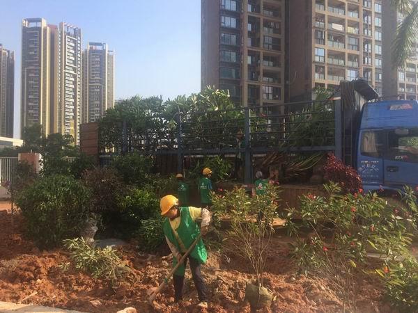 绿植租摆的环保性体现在哪些方面