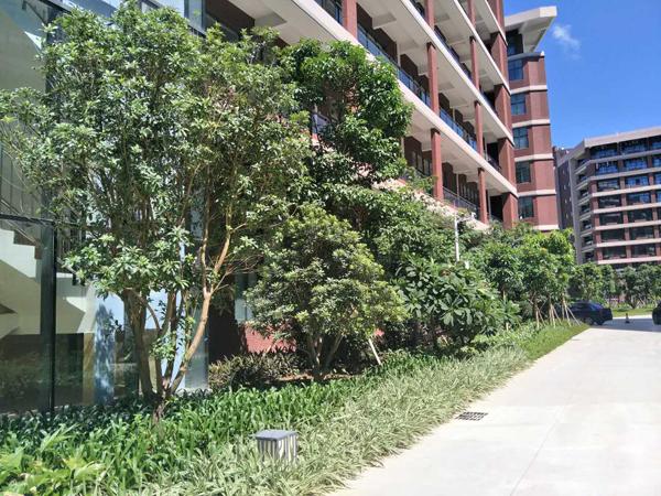 绿植租赁,一站式服务让您感受绿色空间